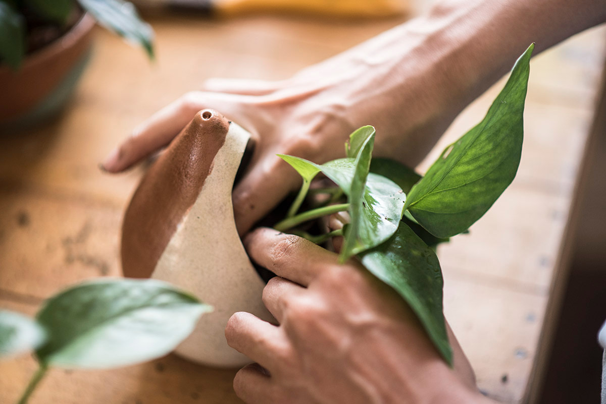 Hipó - Vasos Plantas