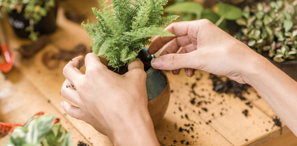 Hipó - Escolher vaso certo planta