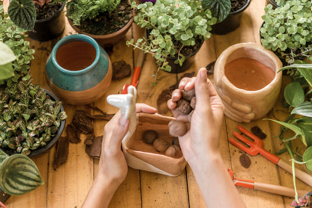 Trocar planta de vaso sem erro - Hipó