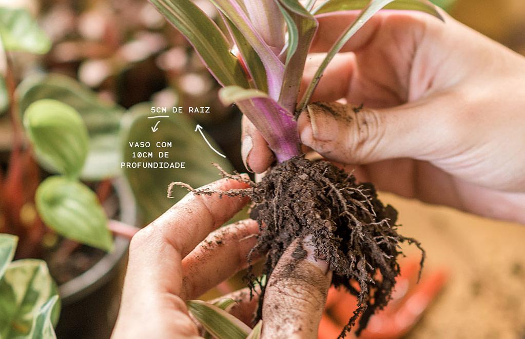Hipó - Como escolher vaso certo para planta dentro de casa